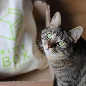 KittyBox août (concours terminé)