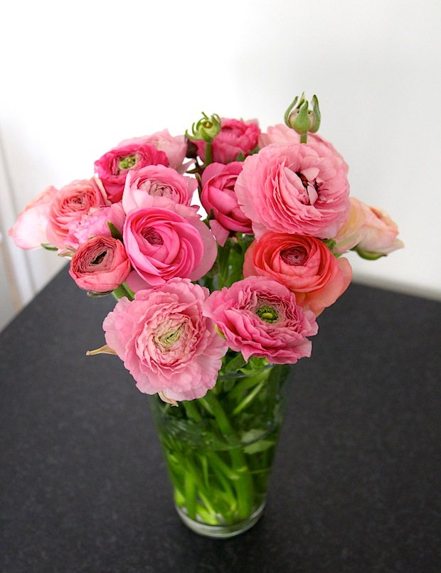 Renoncules roses 1