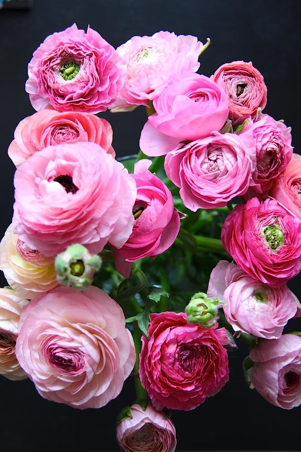 Renoncules roses 2