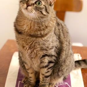 Kittybox de mai