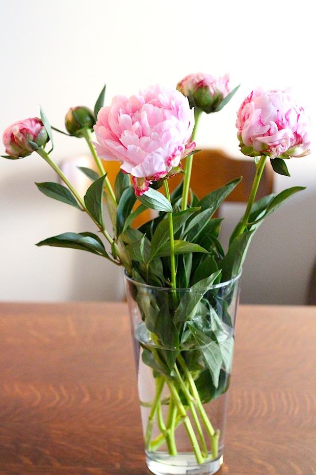 Photo pivoines roses 1
