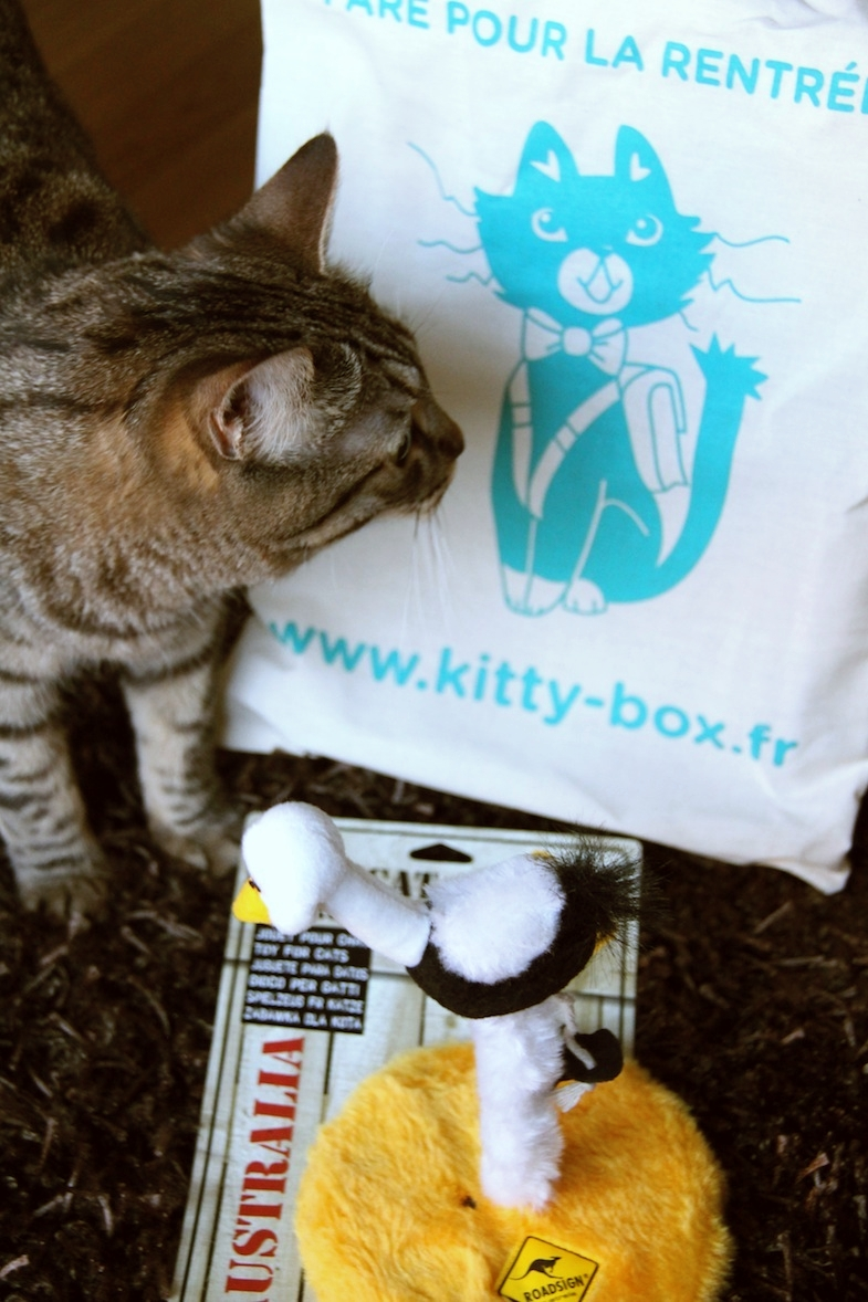 Kittybox rentree aout-11