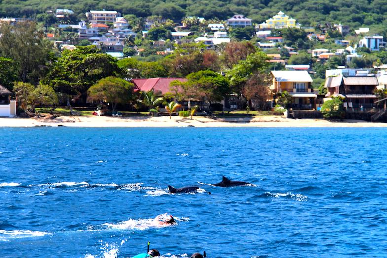 Nage avec les dauphins Ile Maurice-12