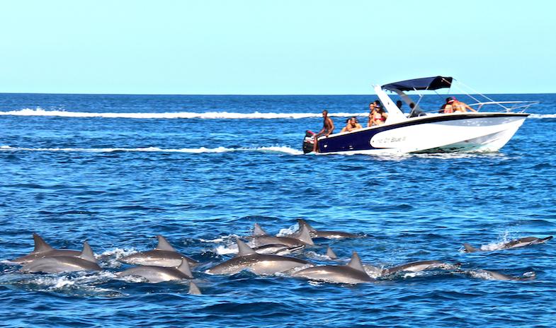 Nage avec les dauphins Ile Maurice-13