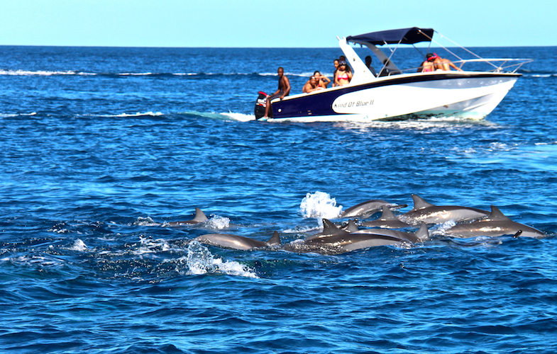 Nage avec les dauphins Ile Maurice-14