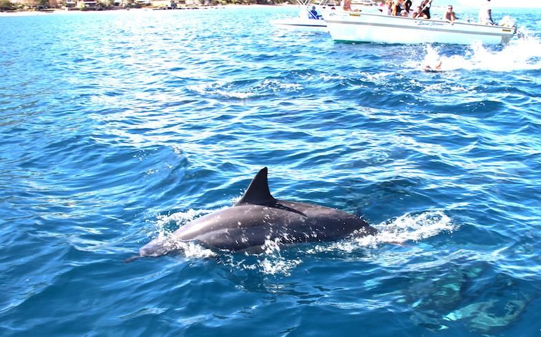 Nage avec les dauphins Ile Maurice-15