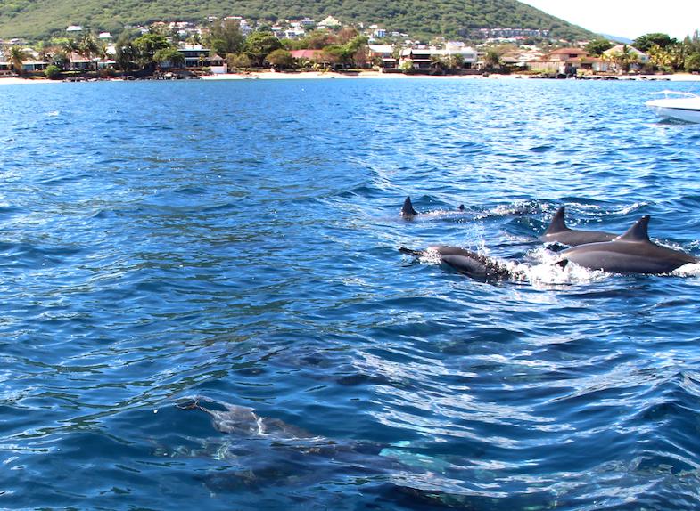 Nage avec les dauphins Ile Maurice-16