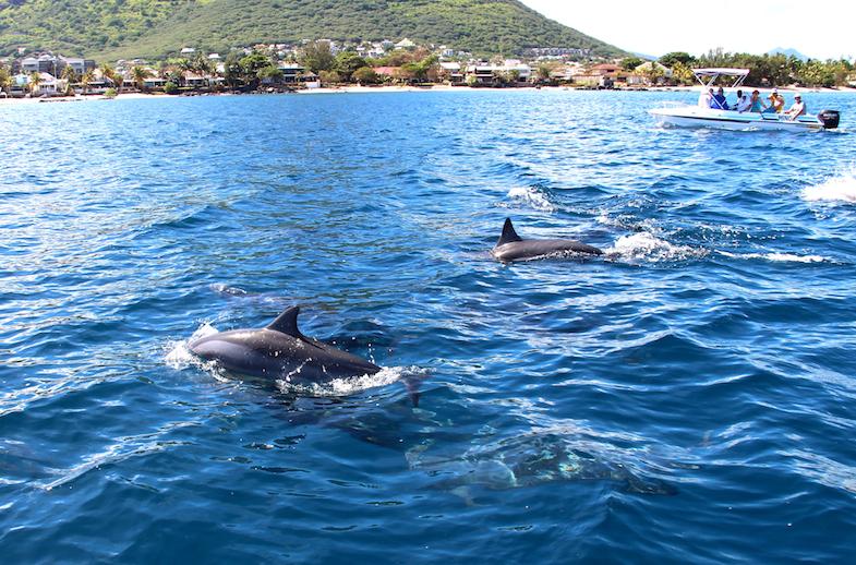 Nage avec les dauphins Ile Maurice-17