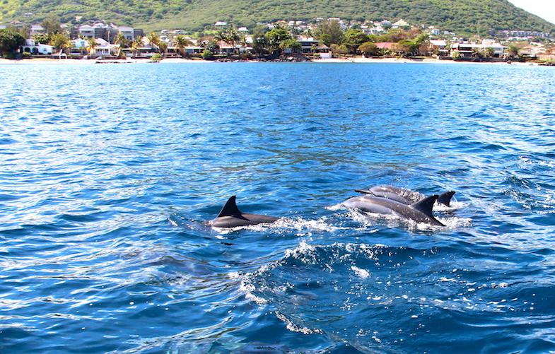 Nage avec les dauphins Ile Maurice-18