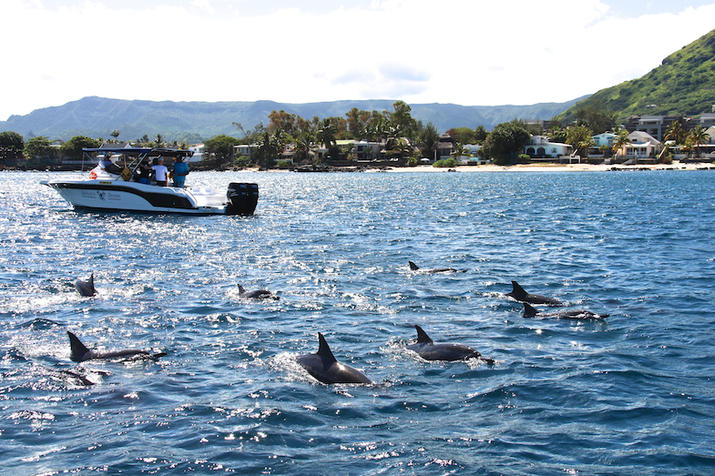 Nage avec les dauphins Ile Maurice-19