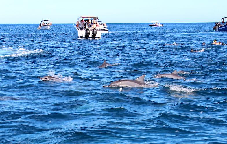 Nage avec les dauphins Ile Maurice-6