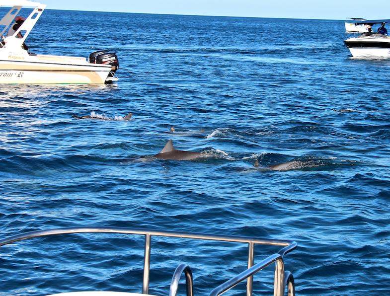 Nage avec les dauphins Ile Maurice-8
