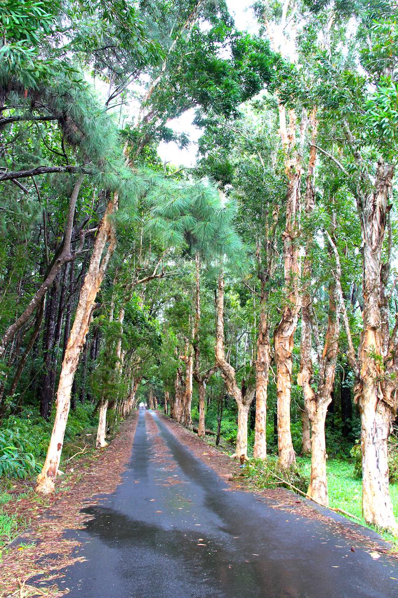 Tourisme vert Ile Maurice