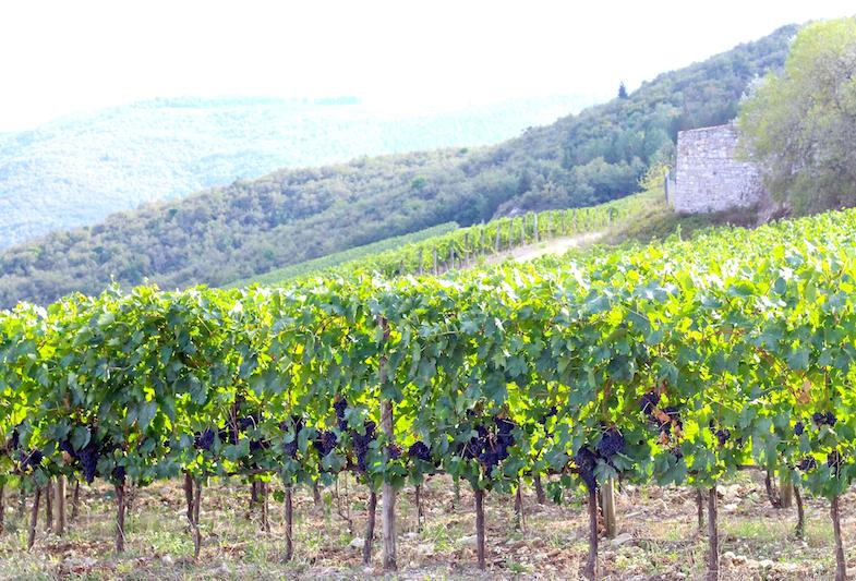 Au coeur de la Toscane-Le Chianti-23
