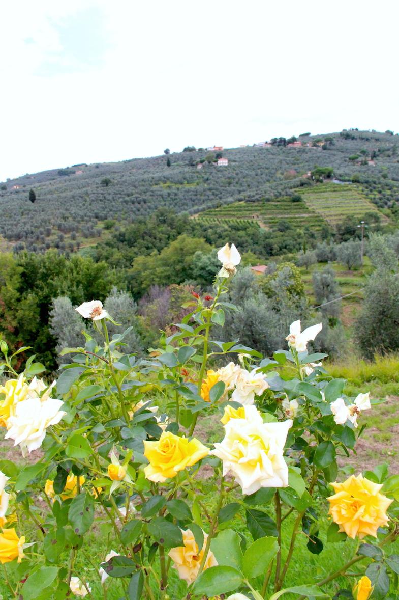 Au coeur de la Toscane-Le Chianti-9