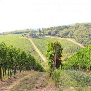 Au coeur de la Toscane: le Chianti
