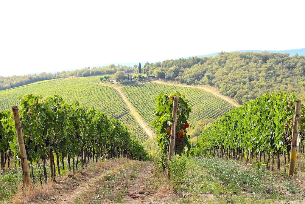 Vignes Chianti Toscane Italie