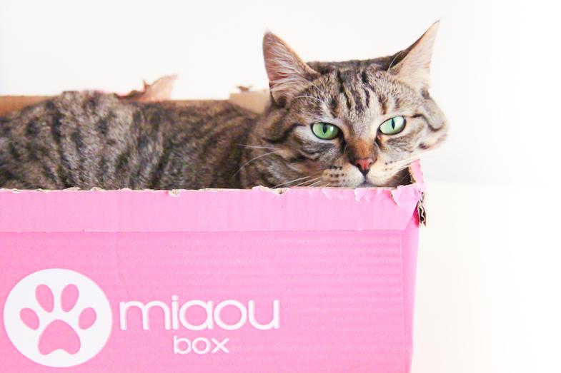 Contenu avis Miaoubox blog-mai