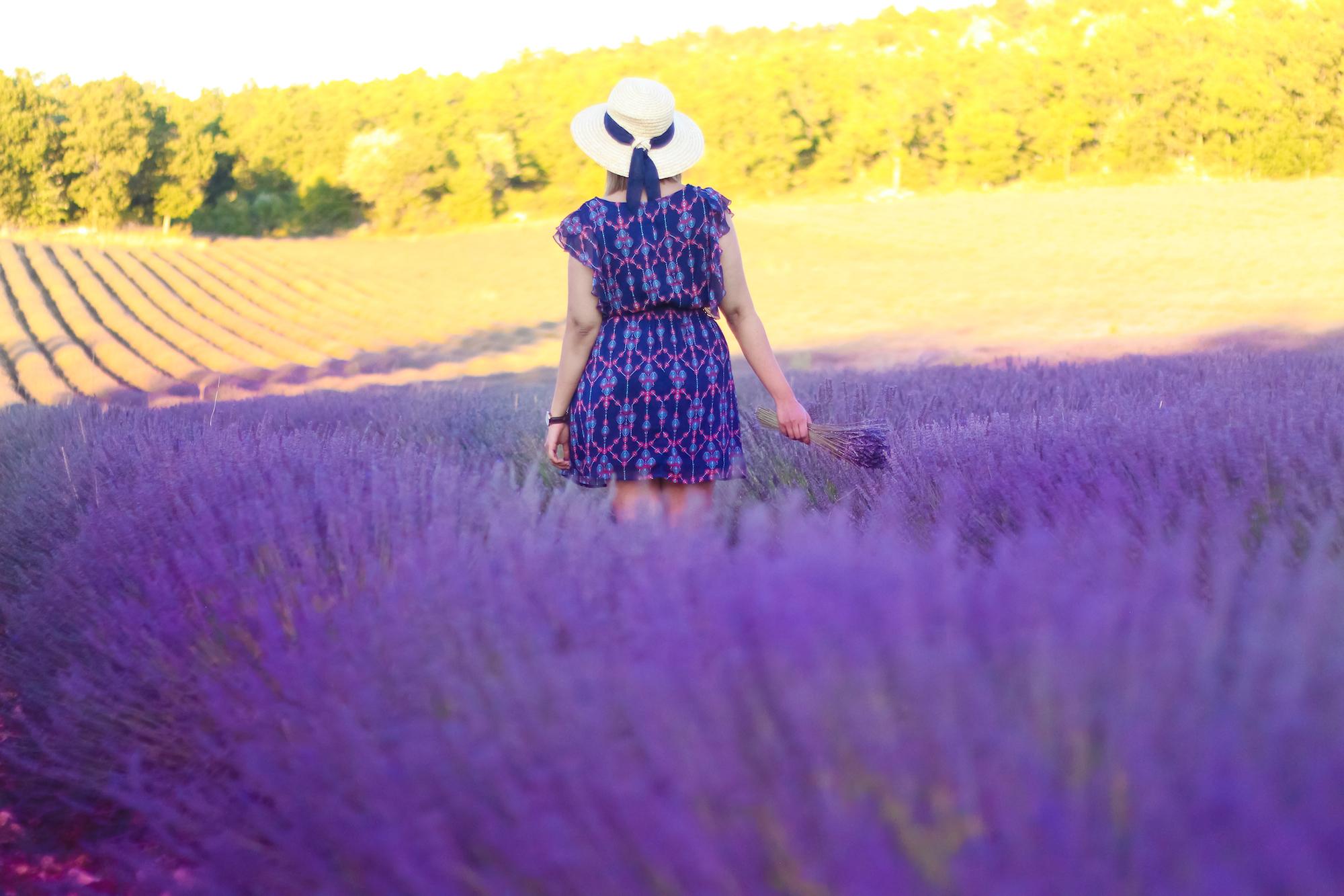 Lavender -10