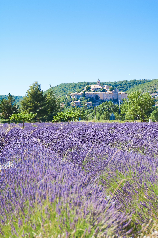 Champs lavande provence village Banon-11