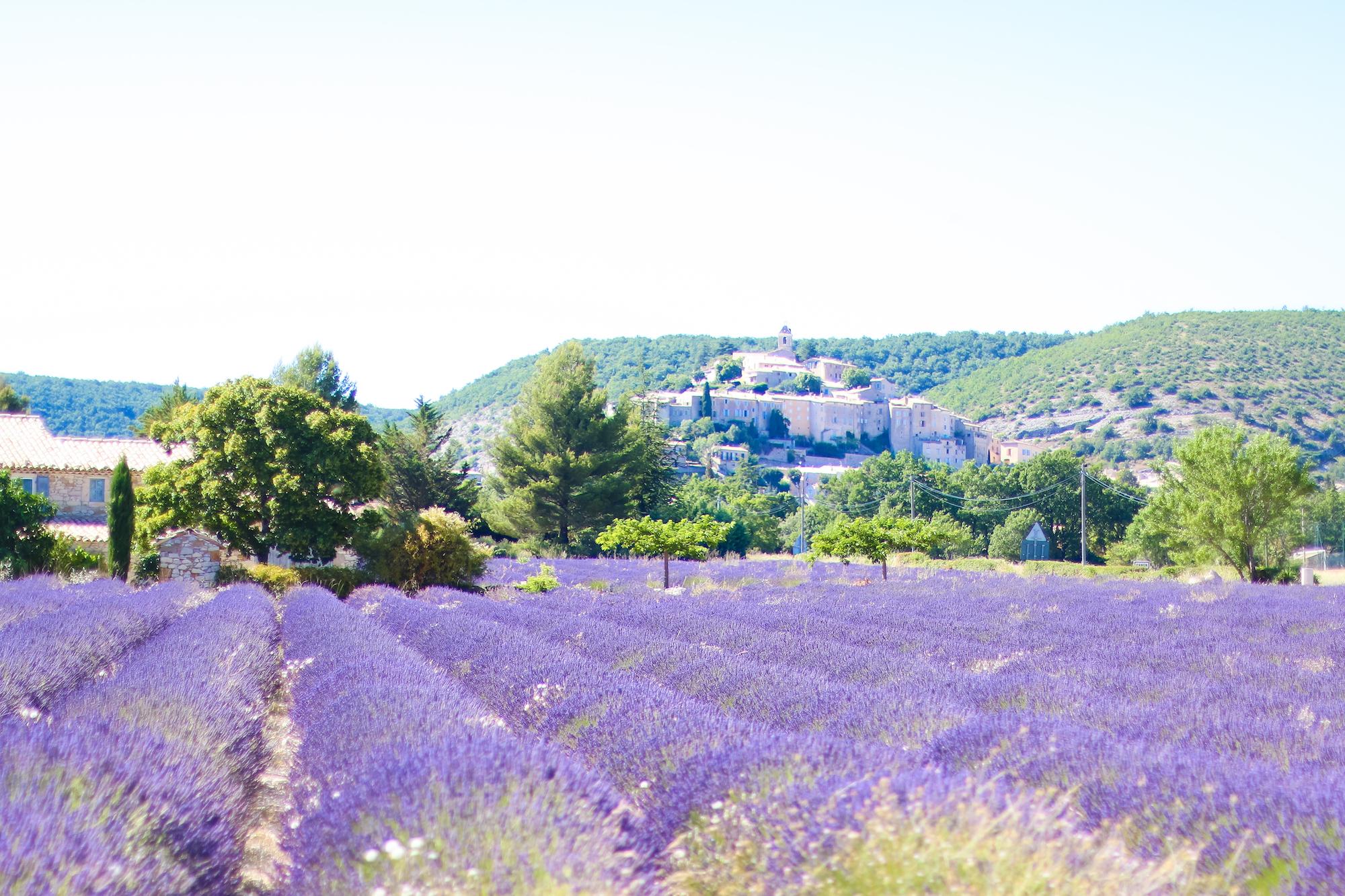 Champs lavande provence village Banon-2