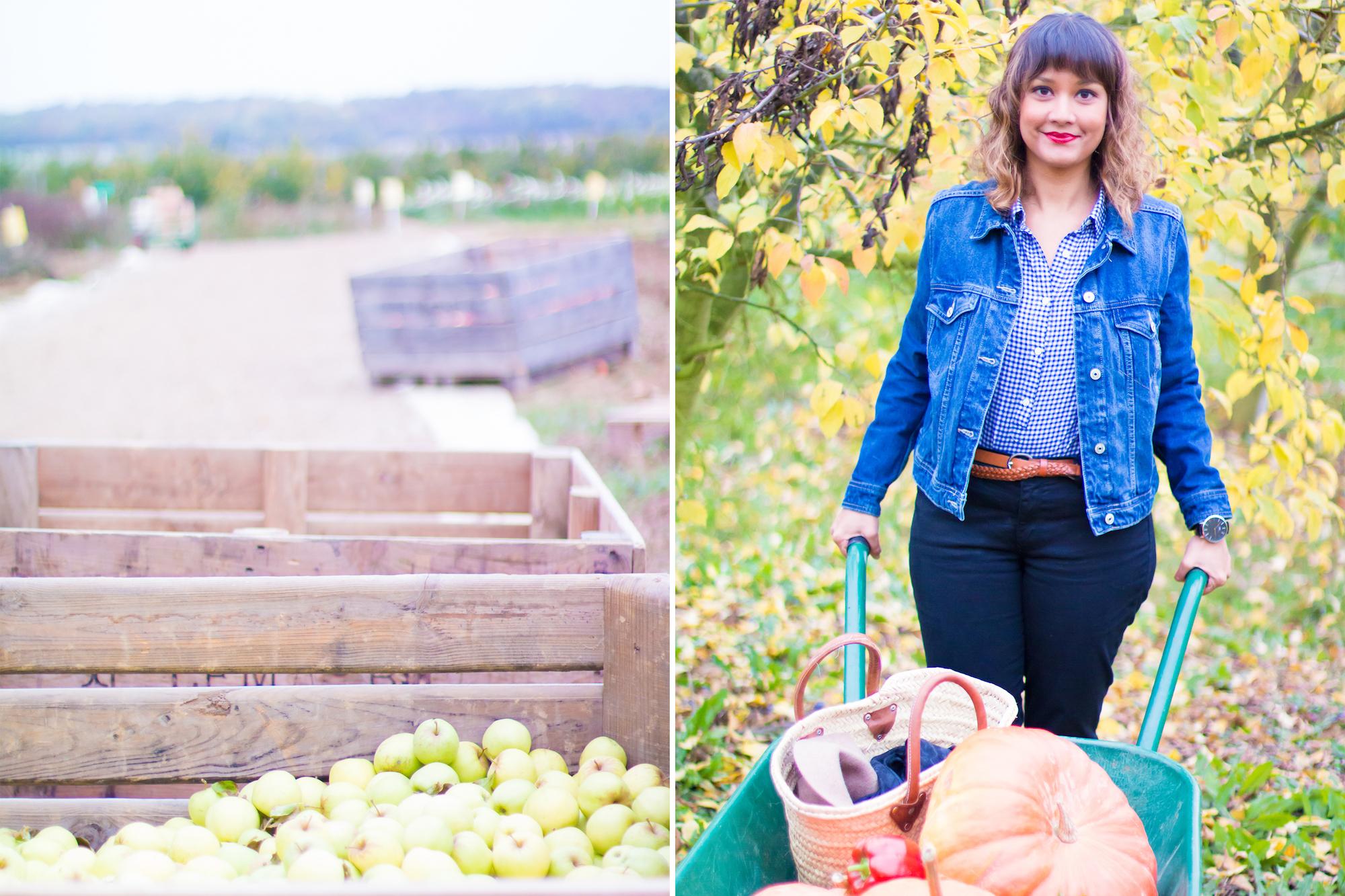 prumpkin-season-ferme-du-logis-1