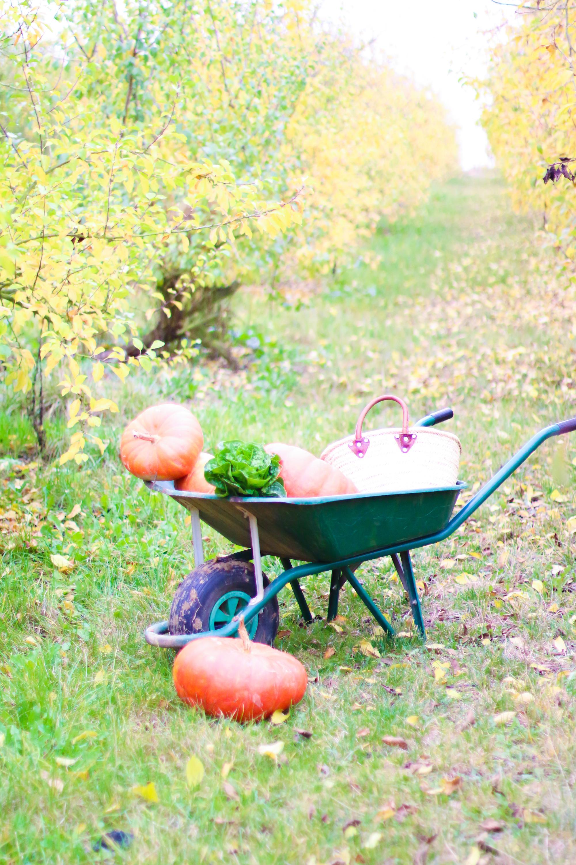 prumpkin-season-ferme-du-logis-11