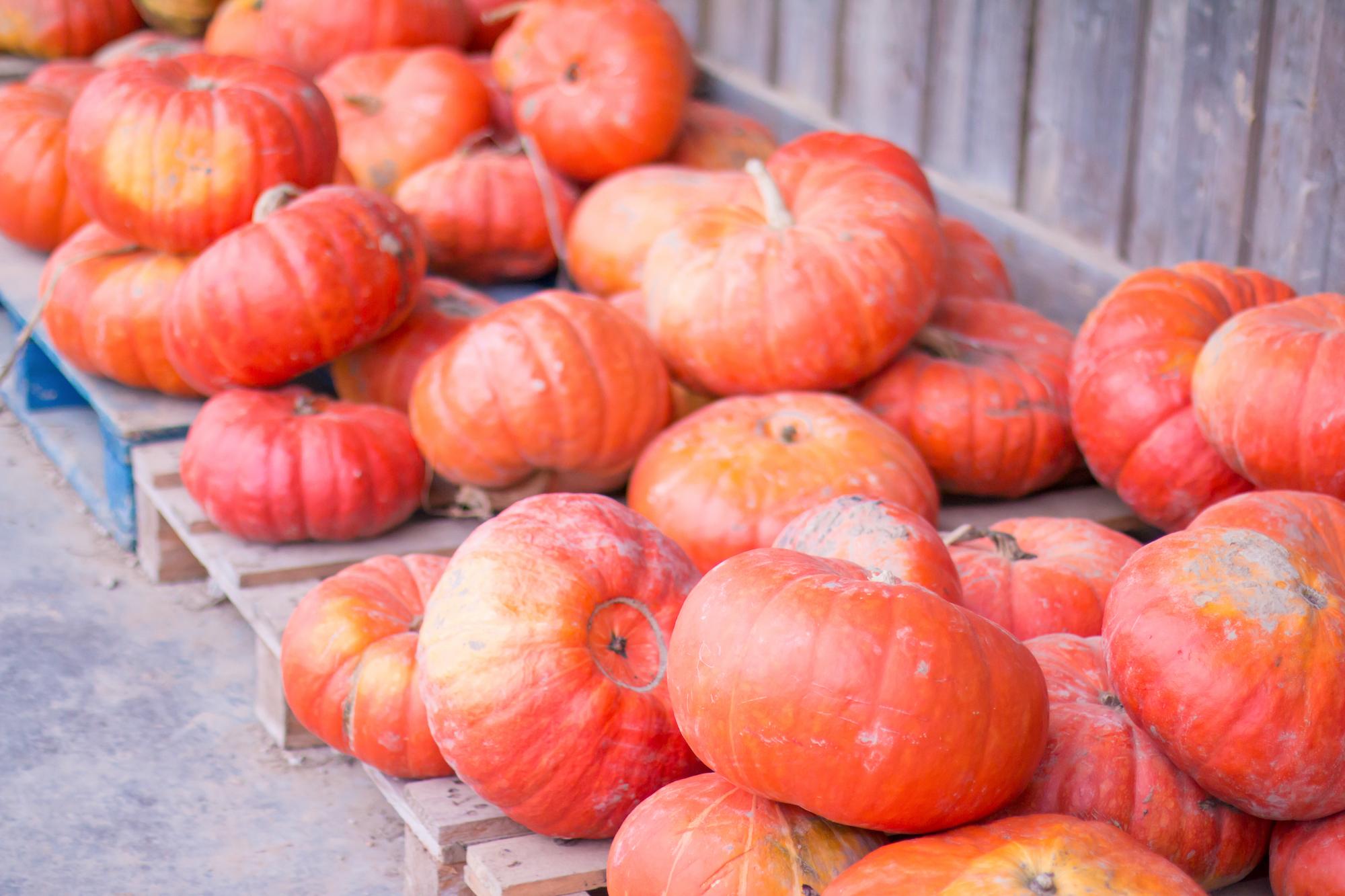 prumpkin-season-ferme-du-logis-2