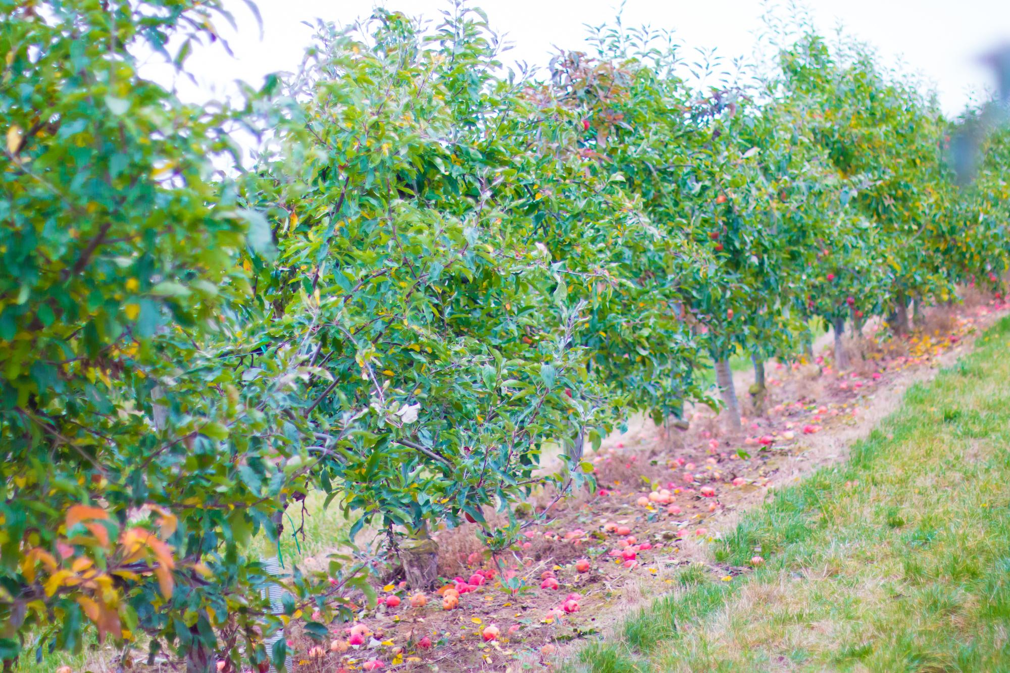 prumpkin-season-ferme-du-logis-3