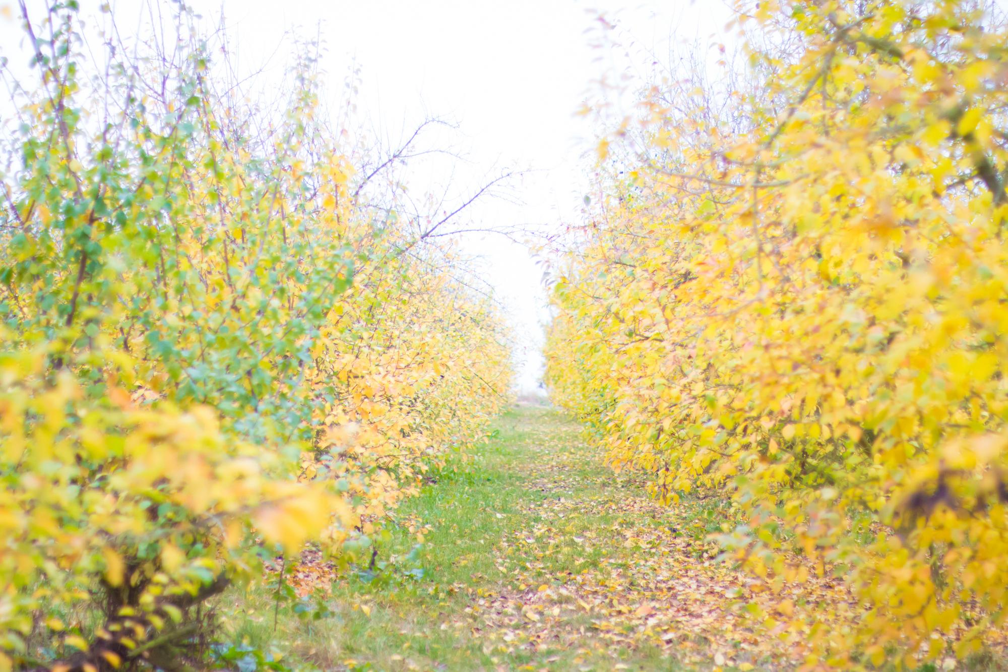 prumpkin-season-ferme-du-logis-4
