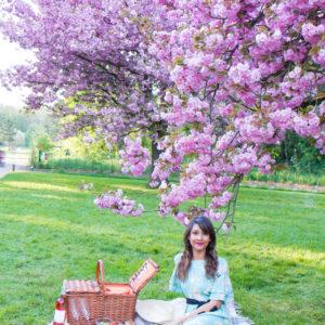Pink paradise – Les cerisiers du Parc de Sceaux
